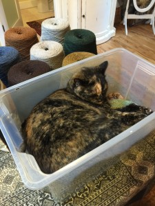 Koko thinks this bin of yarn is a cozy nap spot...hard to argue!